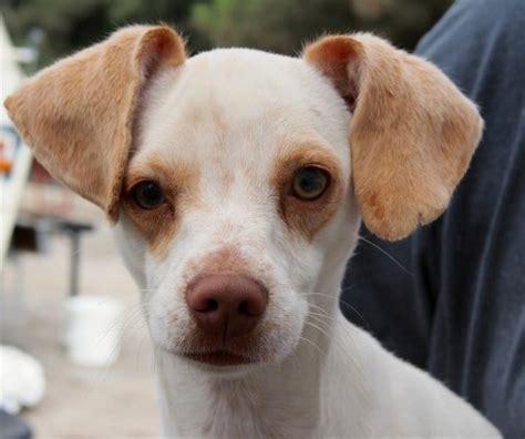 tijuana dogs pet food tax might put more tijuana dogs in jeopardy fronteras desk