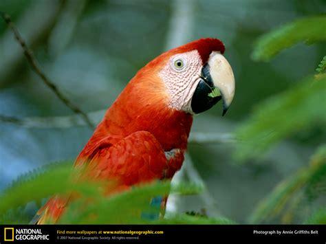 amazon rainforest animals humen creations nature wallpapers amazon rainforest