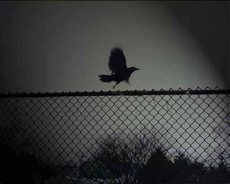 wallpaper dark bird 29 dark backgrounds wallpapers images pictures