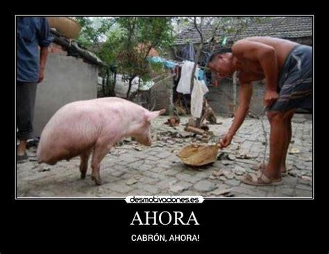 imagenes graciosas de cerdos para navidad ahora desmotivaciones