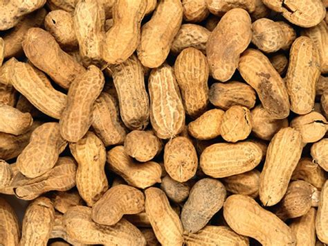 supervised exposure therapy for peanut allergy lasts