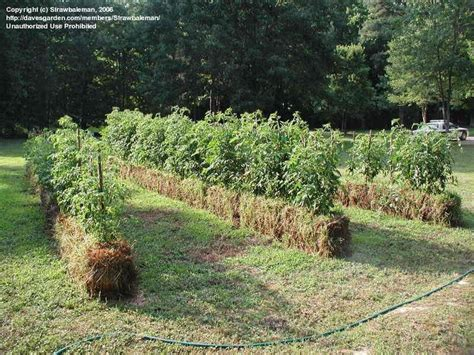 Straw Garden by Dr Wayne Coghlan Chiropractor Locum Tenens Aching
