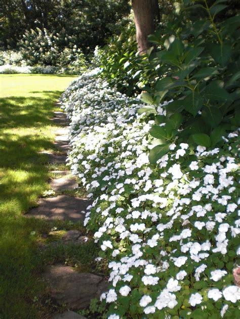 25 best ideas about white gardens on pinterest flower