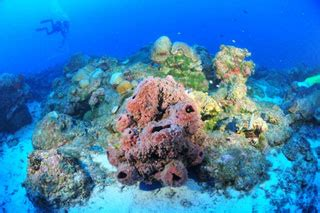 flower garden banks reviews of flower garden banks national marine sanctuary scuba dive advisor