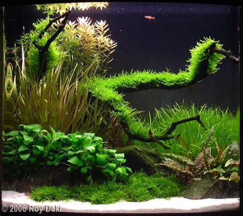 fluval aquascape 46 best images about aquascape fluval edge 46 on pinterest