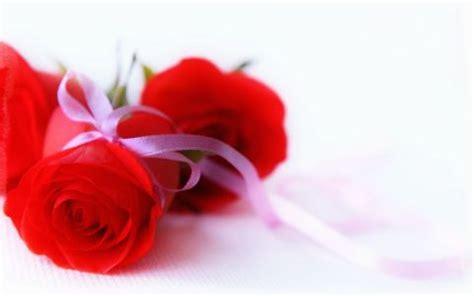 imagenes rojas de fondo fotos de rosas rojas gratis im 225 genes de primavera