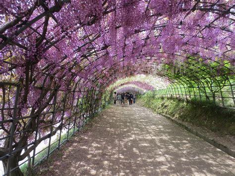 kawachi fuji gardens kawachi fuji garden 素敵なライフ