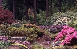 weyerhaeuser rhododendron garden images