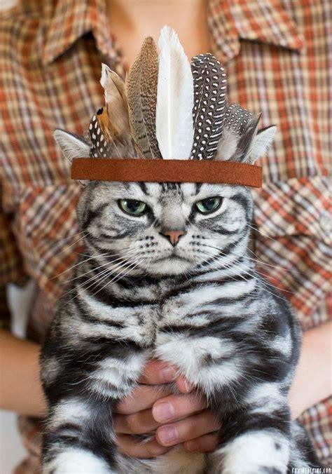 happy thanksgiving cats happy thanksgiving cats pinterest