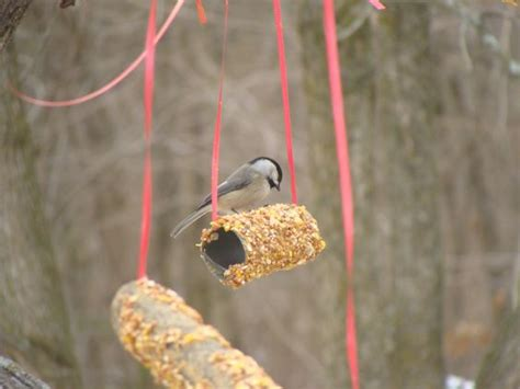 bird feeders made out of toilet paper and paper towel