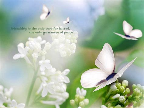 flower wallpaper with friendship quotes cute friendship quotes wallpapers download
