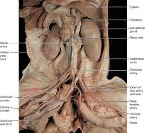 heart dissection lab worksheet worksheet amp workbook site
