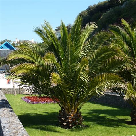 outdoor palm tree l post eye catching tropical plants for your outdoor garden plant