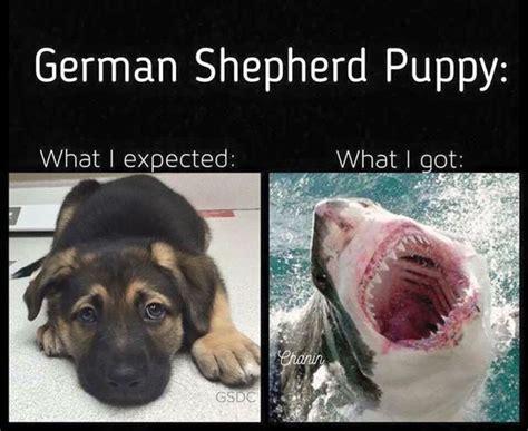 Baby Shark German | the german shepherd german shepherd quotes sayings