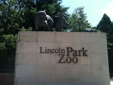 groundhog day lincoln park zoo related keywords suggestions for lincoln park zoo