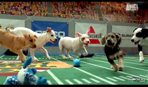puppy bowl did you lose your football league try puppy bowl for the win