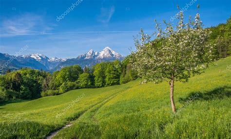 immagini paesaggi fioriti paesaggio di montagna alpino primaverile con fiori e