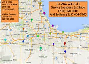 Google Maps Chicago Il by Illinois Wildlife Removal