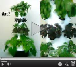Vertical Aeroponic Tower Garden Put A Farmer S Market On Your Back Porch Juice Plus Today