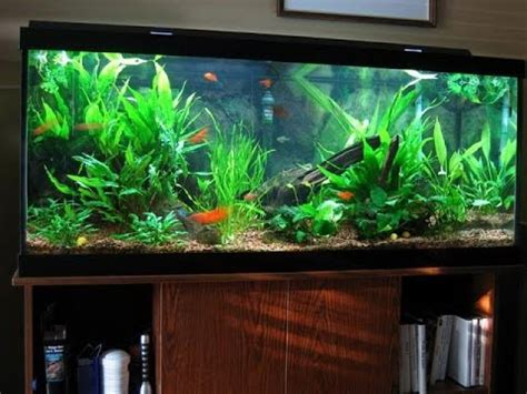 aquarium design youtube diy home made unique aquarium interior design ideas