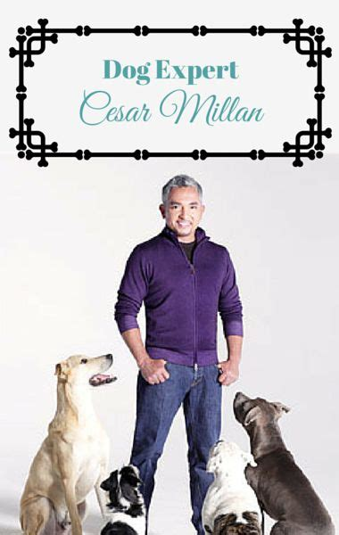 dog whisperer house training 38 best images about cesar milan dog whisperer on pinterest cesar millan last
