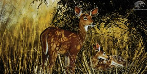 drawing and painting animals image gallery wildlife paintings