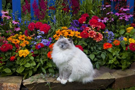 how to keep cats out of flower beds keep cats out of flower beds