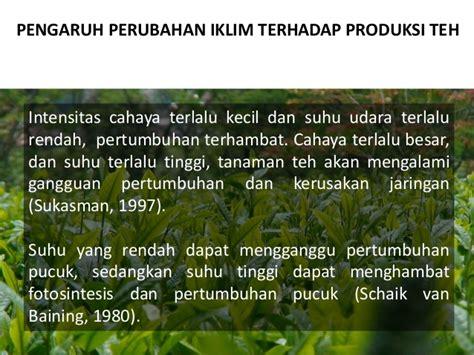 Teh Pucuk Kecil perubahan iklim dan perkebunan teh 2013