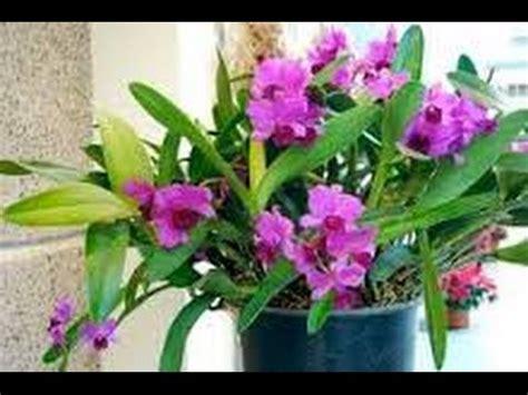 pupuk  bagus  bunga anggrek youtube