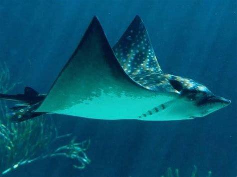 imagenes de animales del mar animales de mar lindas fotos buscar con google
