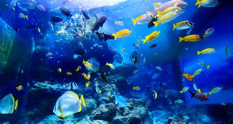 japanese aquarium 100 japanese aquarium rising japanese moss balls