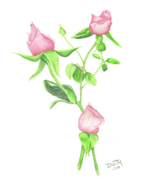 pink rosebud bouquet drawing by dusty reed