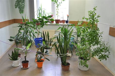 house plants no light como cuidar das plantas durante a viagem casa band com