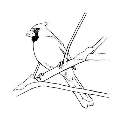 christmas cardinal coloring page www imgkid com the