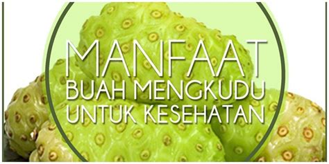 tanaman obat khasiat tanaman obat kandungan zat buah