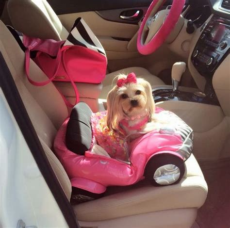 yorkie car seat best 25 car seats ideas on puppy car seat seat and car seats for