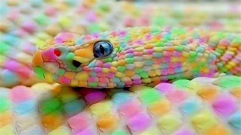 imagenes unicas del mundo 10 serpientes ex 243 ticas 218 nicas en el mundo youtube