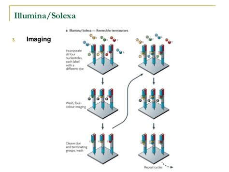 illumina solexa sequencing new generation sequencing technologies an overview