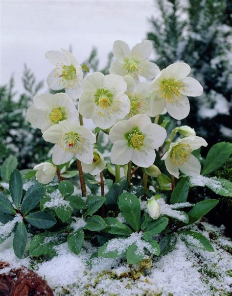 flowers that bloom in winter best 25 winter garden ideas on pinterest winter