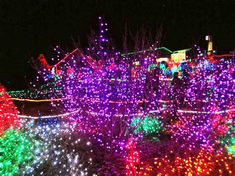 zoo lights in tacoma wa seattle wa pinterest zoos