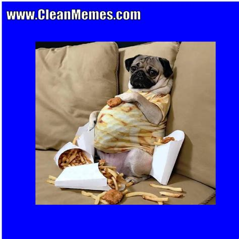 how to clean a pug pug glutton clean memes the best the most