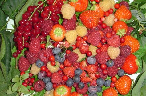 antiossidanti alimenti antiossidanti cibimbo
