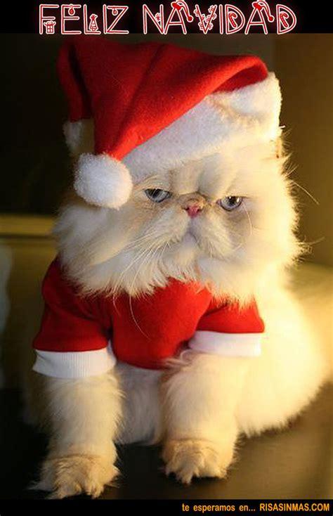 imagenes graciosas sorteo navidad im 225 genes divertidas de feliz navidad