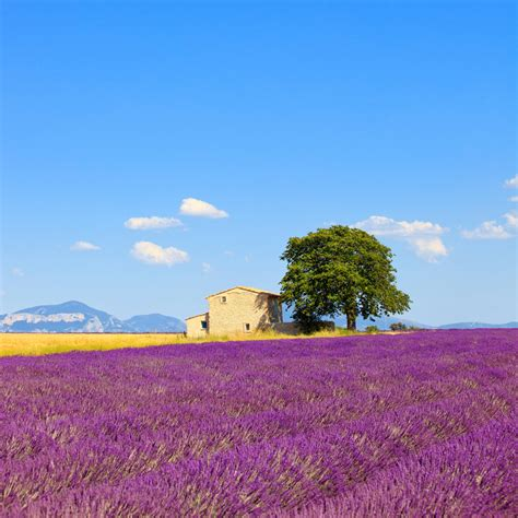 province france cost 2 drive provence france road trip