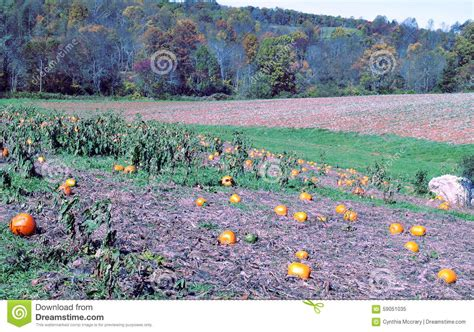 Patchwork Pumpkin - pumpkin patch stock photo image 59051035