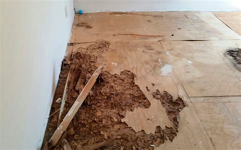 section 1 termite termite inspection services for escrow in thousand oaks