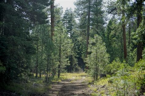 utah tree permits forest service u s forest service tree cutting permits on sale