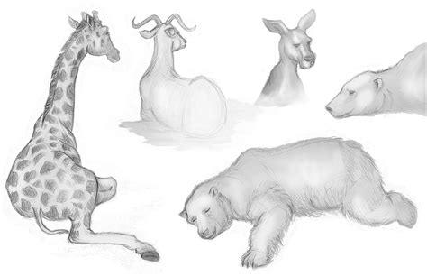 Drawings Of Animals by Animal Drawings November 2009