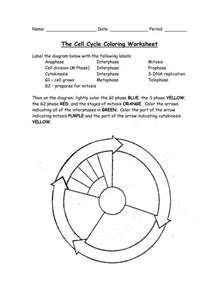the cell cycle coloring worksheet answers the cell cycle coloring worksheet answer deployday