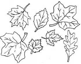 fall leaves coloring pages autumn leaves coloring page az coloring pages